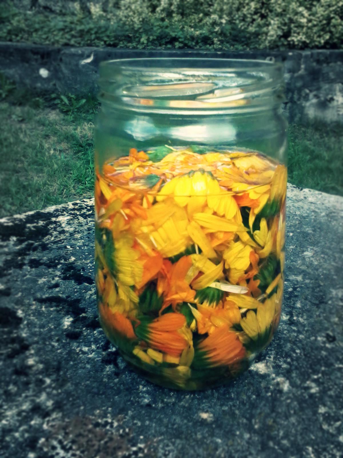 Ma recette d?onguent aux fleurs de calendule : ~ Fleurs De Jardin Soucis