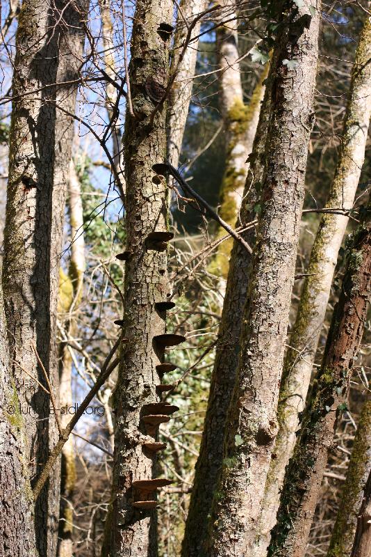 bois-échelle-lutin